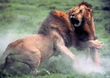 baston_lions_FJK